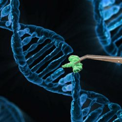 Workshop on Genome editing and Gene Targeting  in Plants